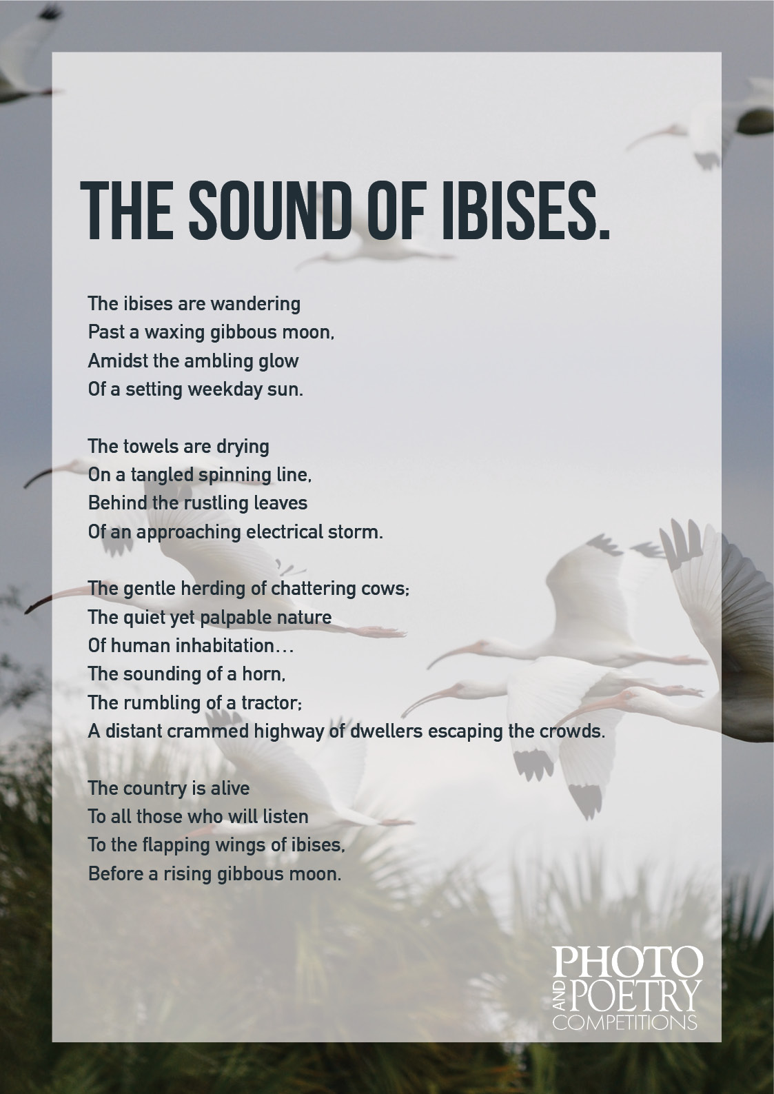Tristan Kelly - The Sound of Ibises