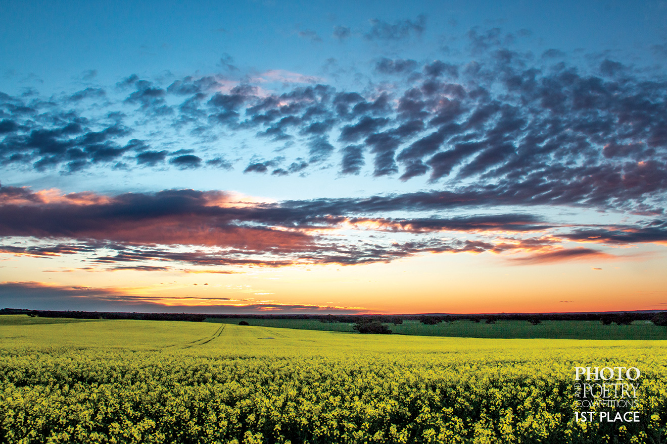 Naomi Thomas - Mallee sunset over a canola paddock.