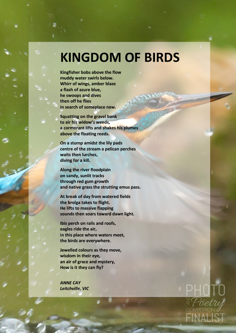 KINGDOM OF BIRDS - ANNE CAY, Leitchville, VIC