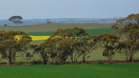 Fields east of Northam, Western Australia
