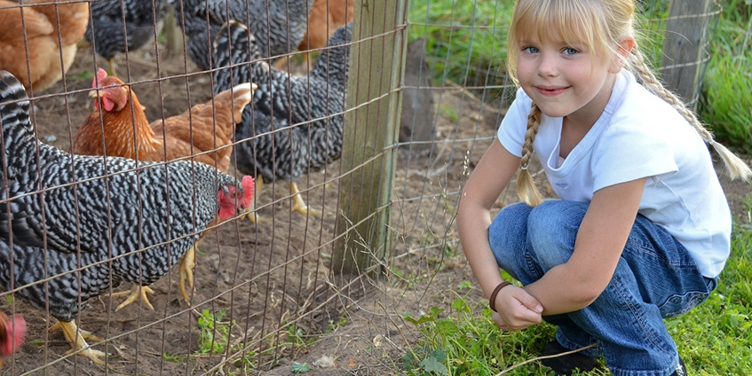 Chickens with girl