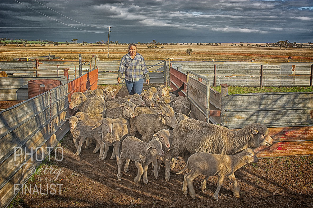 Katie - Katie works on the family farm in Goomalling in the Wheatbelt region of Western Australia. On this afternoon she was bringing the sheep in ready for crutching. She is a very hands on girl working on the farm and she also makes amazing sculptures out of recycled farm equipment. JILL PONTAGUE, Busselton, WA